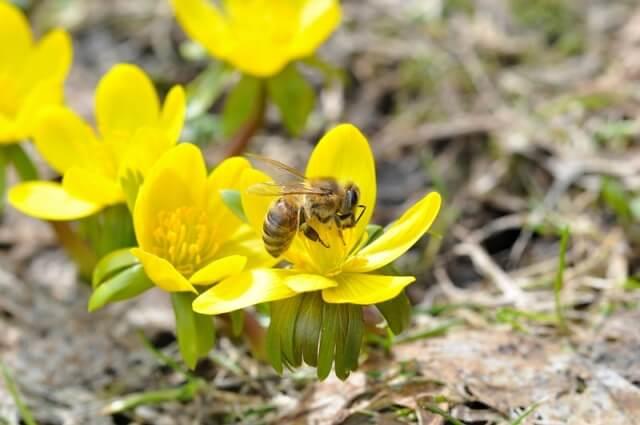 Что общего у стальной проволоки и мёда? Устройство и назначение рамок в улей